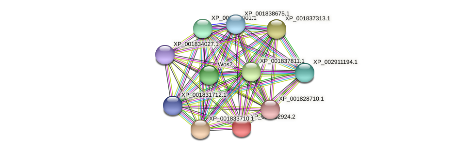 CC1G_12293 protein (Coprinopsis cinerea) - STRING interaction network