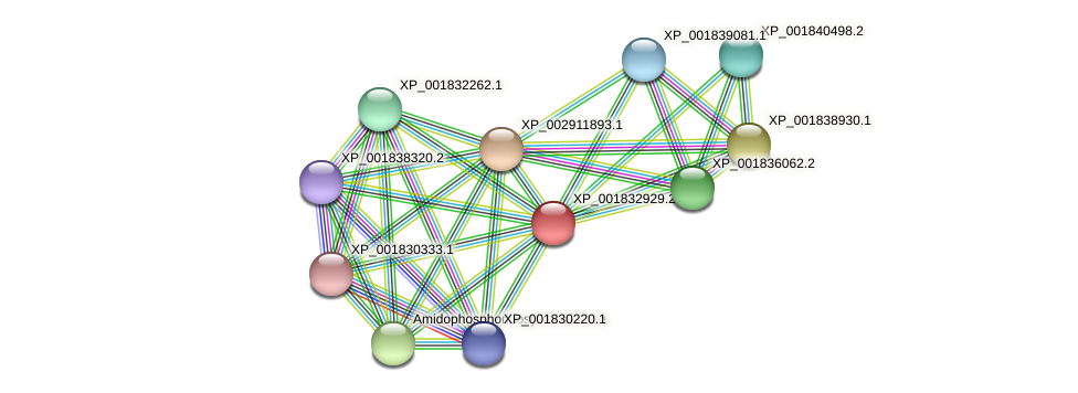 CC1G_12298 protein (Coprinopsis cinerea) - STRING interaction network
