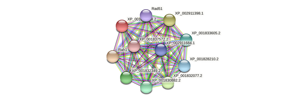 CC1G_04178 protein (Coprinopsis cinerea) - STRING interaction network