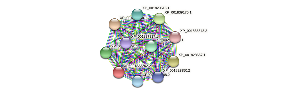 CC1G_04181 protein (Coprinopsis cinerea) - STRING interaction network