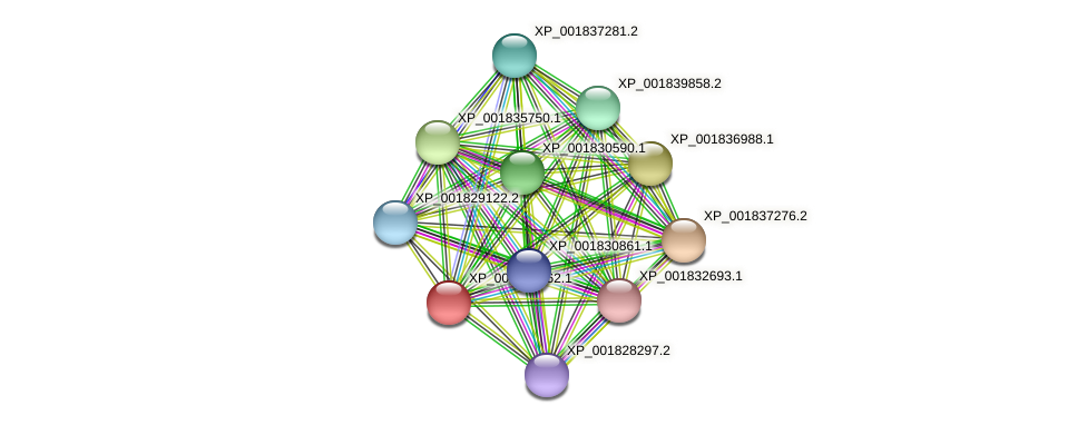 CC1G_04241 protein (Coprinopsis cinerea) - STRING interaction network
