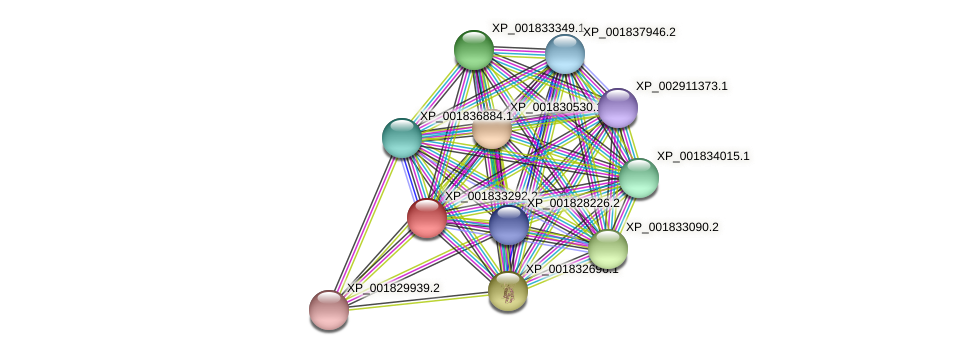 CC1G_04271 protein (Coprinopsis cinerea) - STRING interaction network
