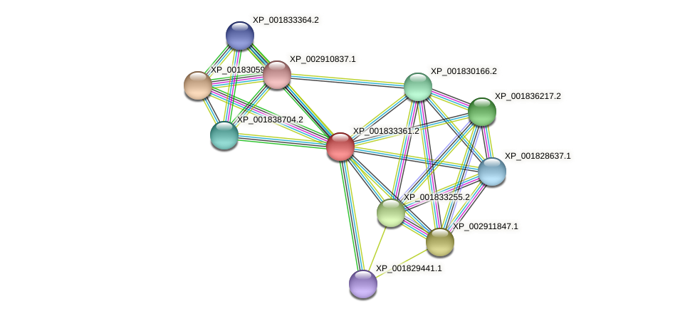 CC1G_11938 protein (Coprinopsis cinerea) - STRING interaction network