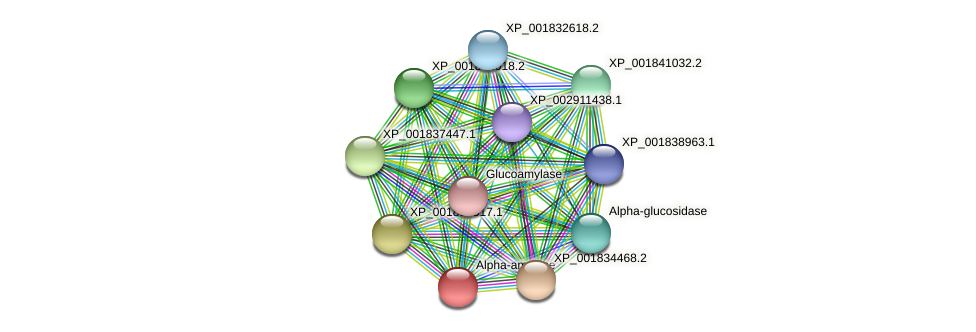 CC1G_05144 protein (Coprinopsis cinerea) - STRING interaction network