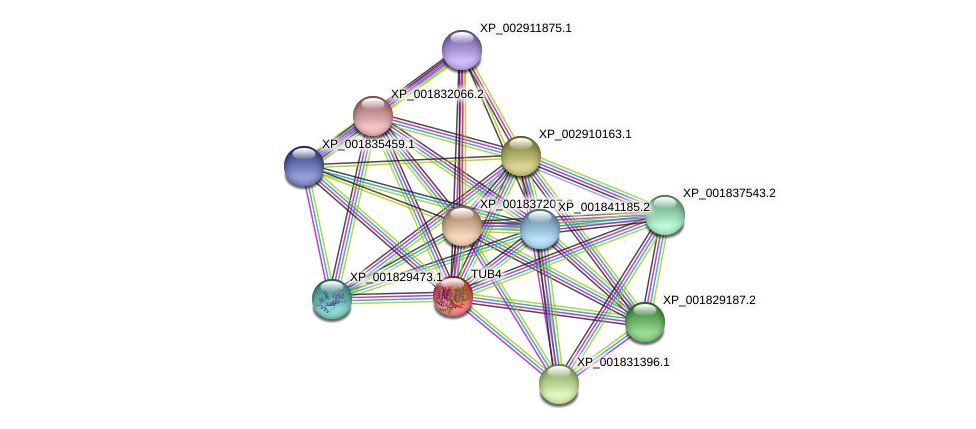 TUB4 protein (Coprinopsis cinerea) - STRING interaction network