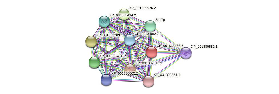 CC1G_05166 protein (Coprinopsis cinerea) - STRING interaction network