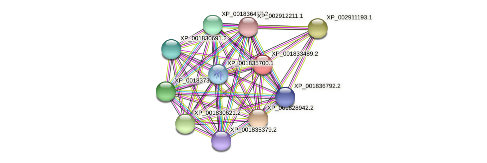 CC1G_05189 protein (Coprinopsis cinerea) - STRING interaction network