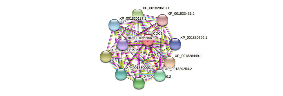 CC1G_11763 protein (Coprinopsis cinerea) - STRING interaction network