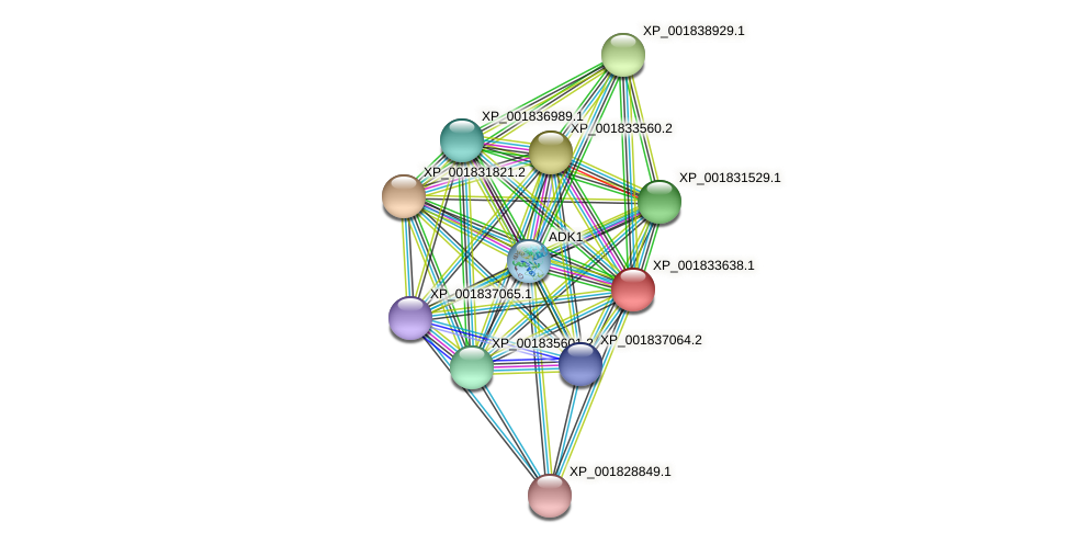 CC1G_03855 protein (Coprinopsis cinerea) - STRING interaction network