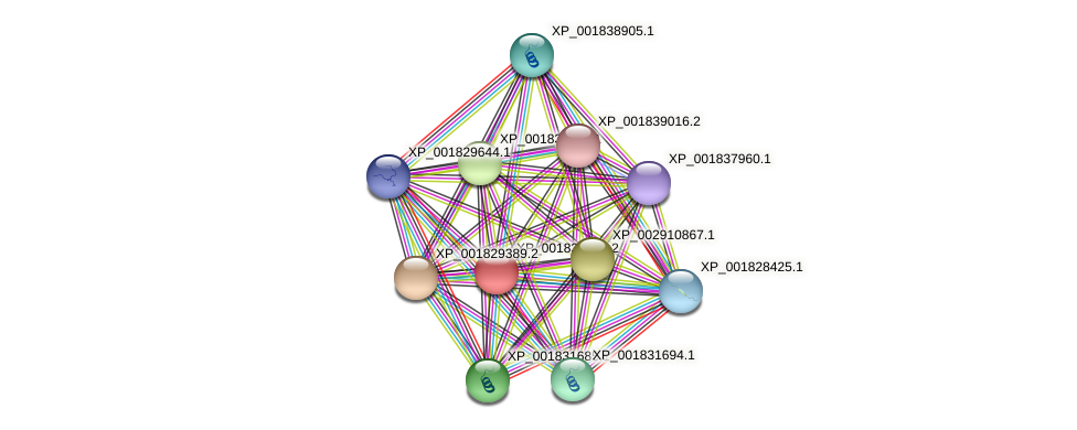 CC1G_03870 protein (Coprinopsis cinerea) - STRING interaction network