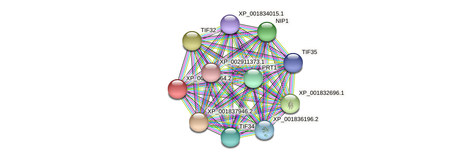 CC1G_03881 protein (Coprinopsis cinerea) - STRING interaction network