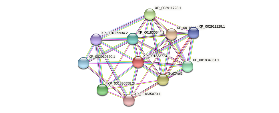 CC1G_10838 protein (Coprinopsis cinerea) - STRING interaction network