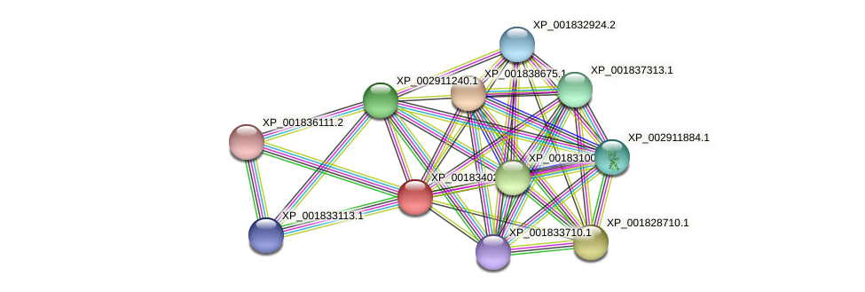 CC1G_09441 protein (Coprinopsis cinerea) - STRING interaction network