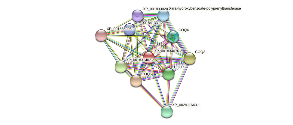 CC1G_11046 protein (Coprinopsis cinerea) - STRING interaction network