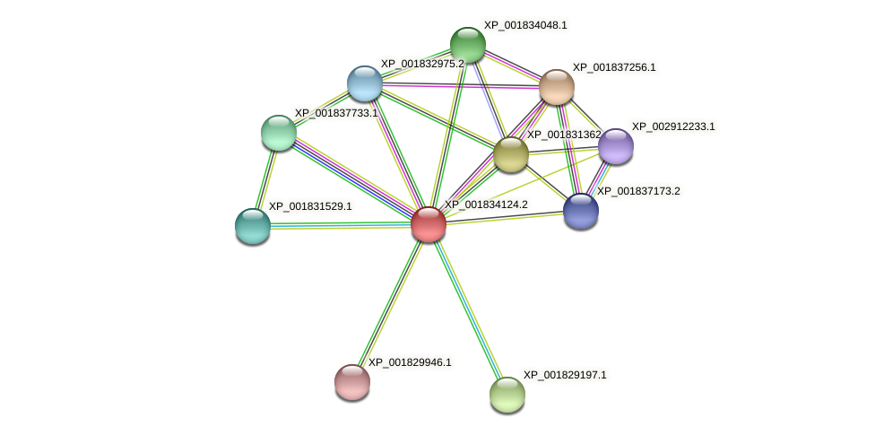 CC1G_08755 protein (Coprinopsis cinerea) - STRING interaction network