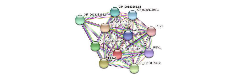 CC1G_08756 protein (Coprinopsis cinerea) - STRING interaction network