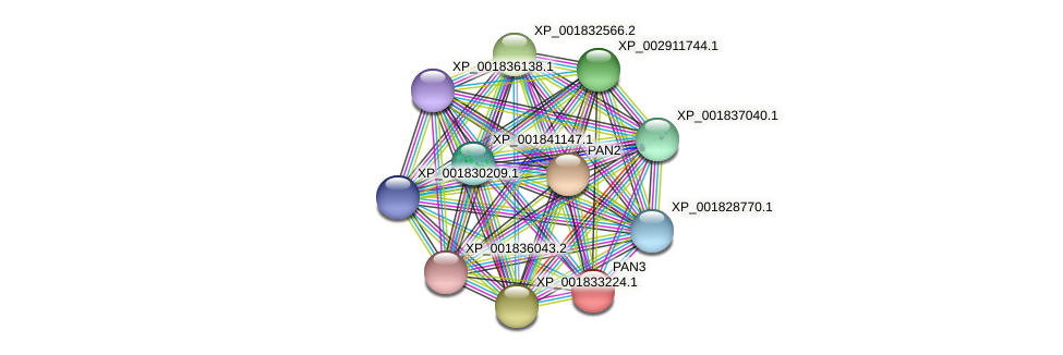 PAN3 protein (Coprinopsis cinerea) - STRING interaction network