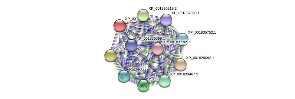 CC1G_02145 protein (Coprinopsis cinerea) - STRING interaction network