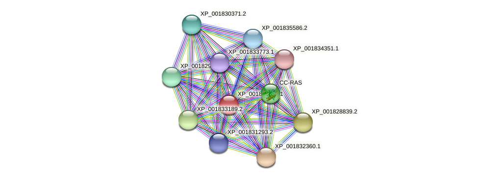 CC1G_02205 protein (Coprinopsis cinerea) - STRING interaction network