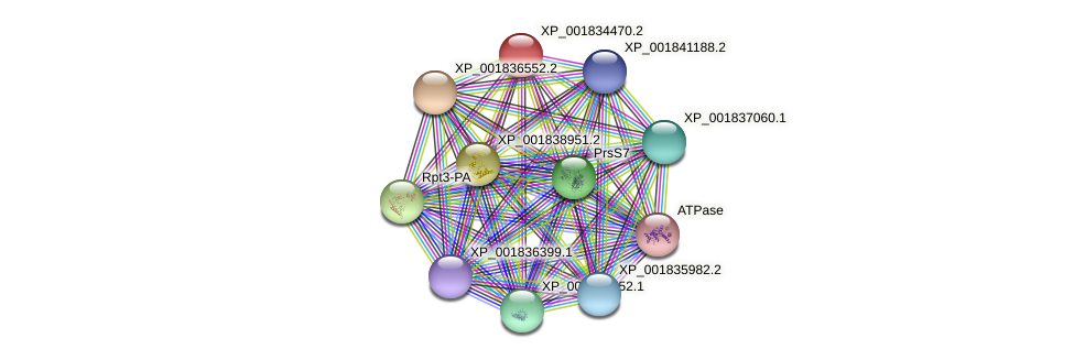CC1G_02206 protein (Coprinopsis cinerea) - STRING interaction network