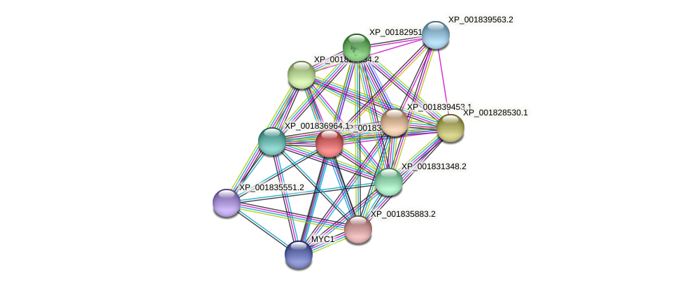 CC1G_05829 protein (Coprinopsis cinerea) - STRING interaction network
