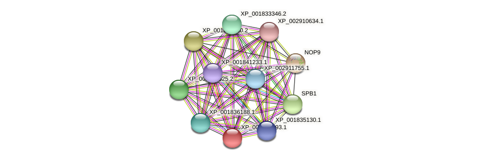 CC1G_05830 protein (Coprinopsis cinerea) - STRING interaction network