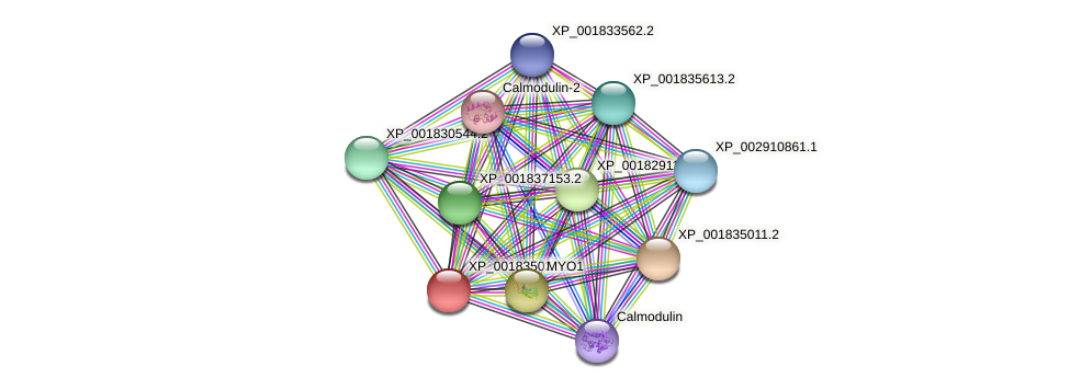 CC1G_09915 protein (Coprinopsis cinerea) - STRING interaction network