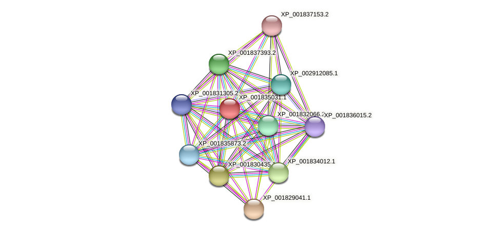 CC1G_09922 protein (Coprinopsis cinerea) - STRING interaction network