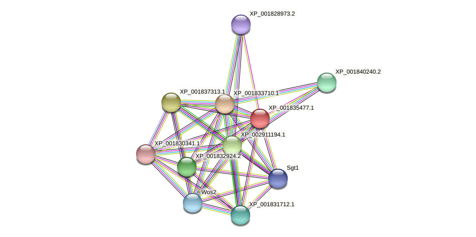 CC1G_05439 protein (Coprinopsis cinerea) - STRING interaction network