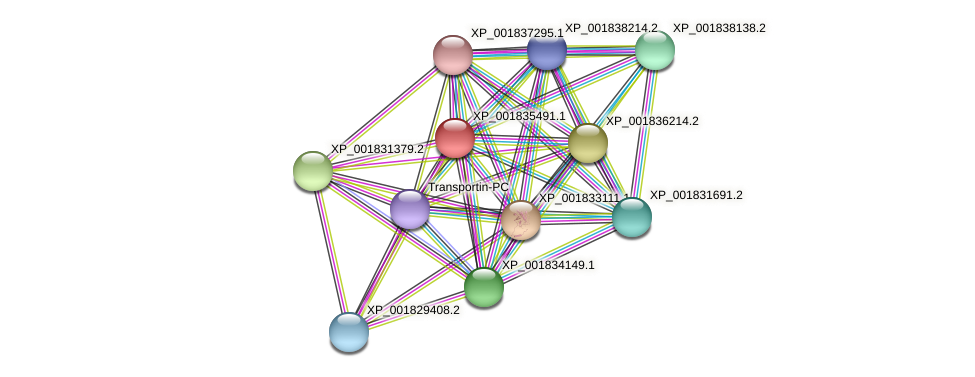 CC1G_08000 protein (Coprinopsis cinerea) - STRING interaction network