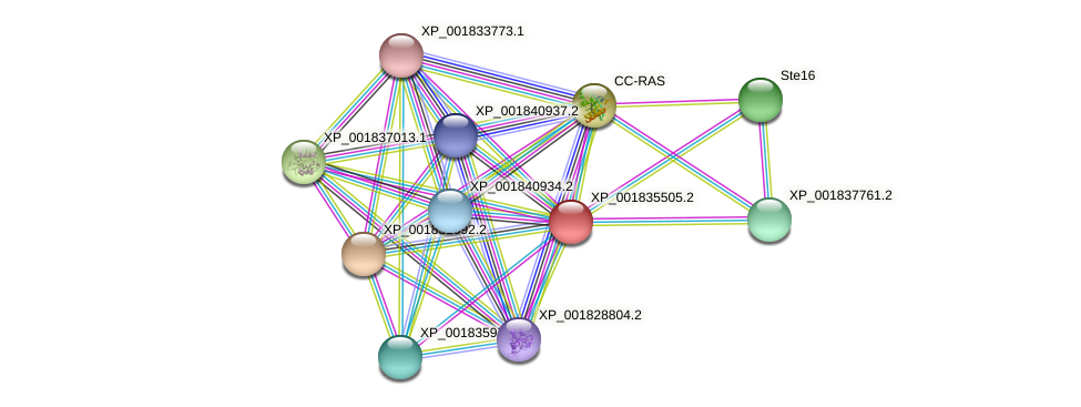 CC1G_08014 protein (Coprinopsis cinerea) - STRING interaction network