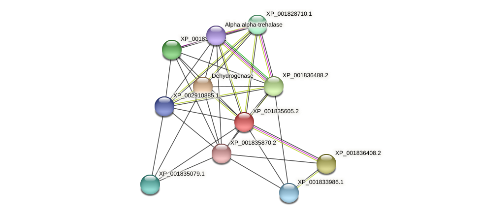 CC1G_03387 protein (Coprinopsis cinerea) - STRING interaction network