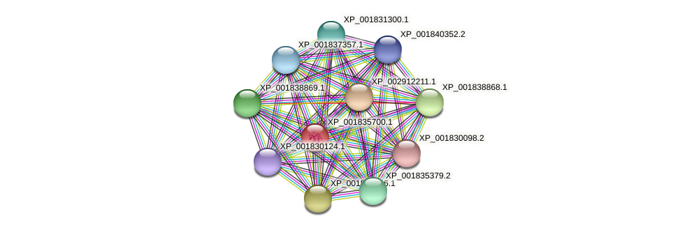 CC1G_07124 protein (Coprinopsis cinerea) - STRING interaction network