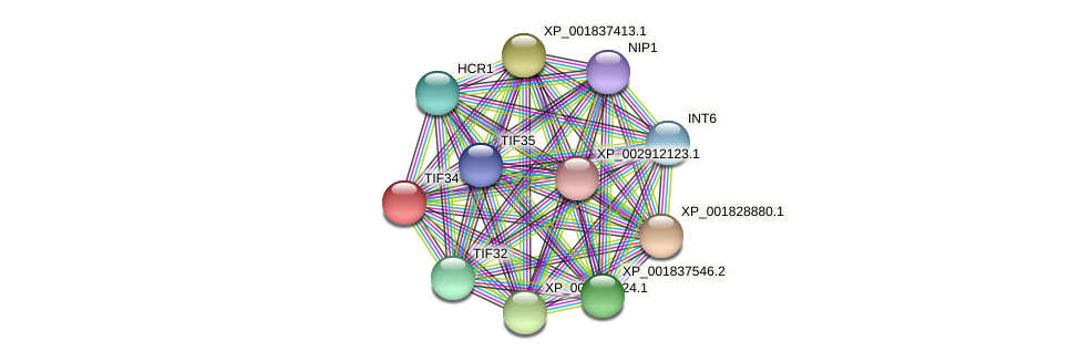 TIF34 protein (Coprinopsis cinerea) - STRING interaction network