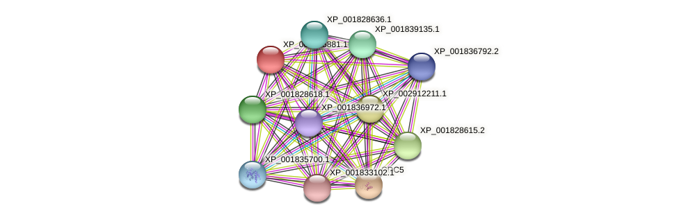 CC1G_02969 protein (Coprinopsis cinerea) - STRING interaction network