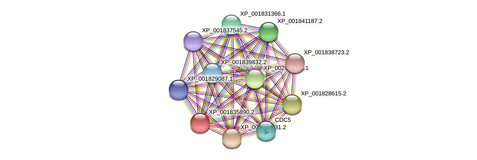CC1G_02978 protein (Coprinopsis cinerea) - STRING interaction network