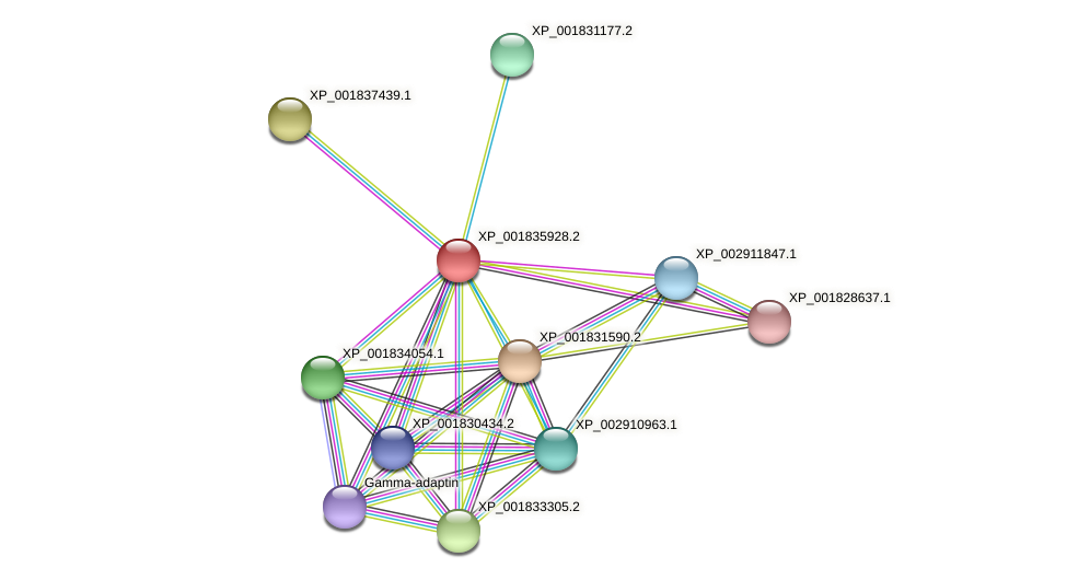 CC1G_03016 protein (Coprinopsis cinerea) - STRING interaction network