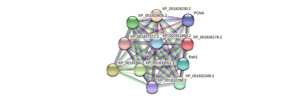 CC1G_06263 protein (Coprinopsis cinerea) - STRING interaction network