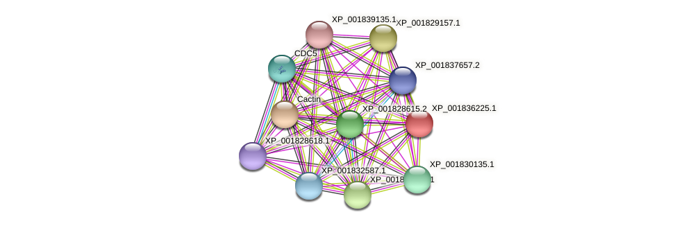 CC1G_06310 protein (Coprinopsis cinerea) - STRING interaction network