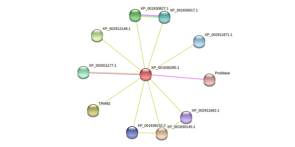 CC1G_06370 protein (Coprinopsis cinerea) - STRING interaction network
