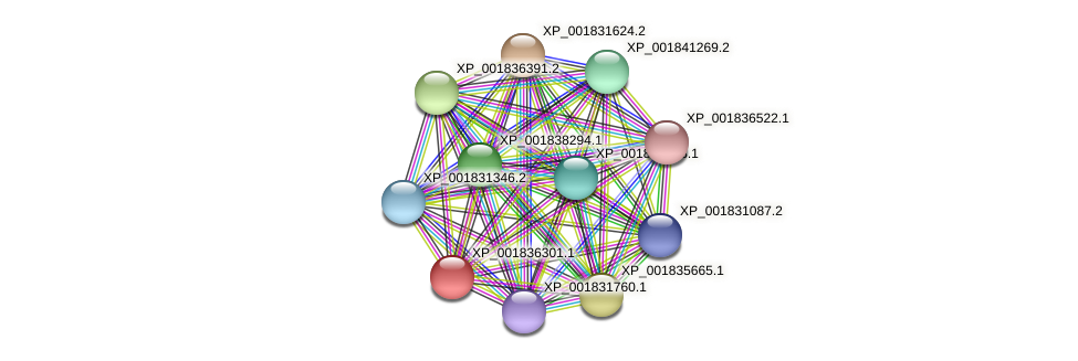 CC1G_06386 protein (Coprinopsis cinerea) - STRING interaction network