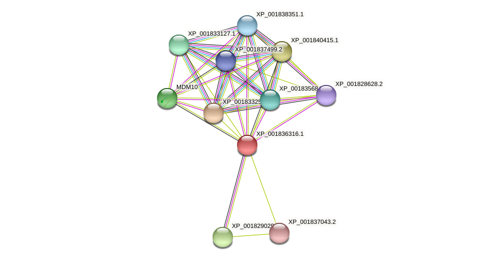 CC1G_06401 protein (Coprinopsis cinerea) - STRING interaction network