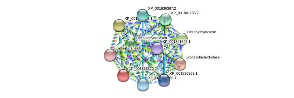 CC1G_12411 protein (Coprinopsis cinerea) - STRING interaction network