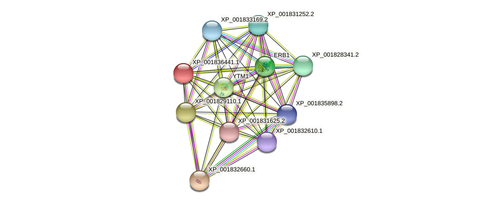 CC1G_07088 protein (Coprinopsis cinerea) - STRING interaction network