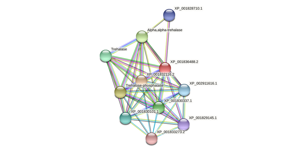 CC1G_07571 protein (Coprinopsis cinerea) - STRING interaction network