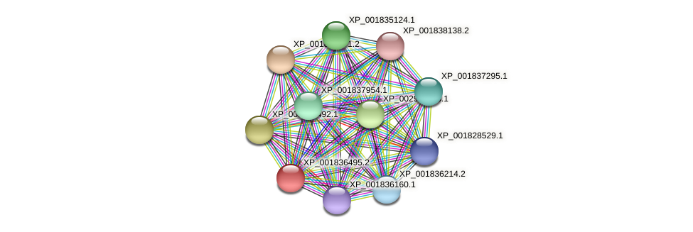 CC1G_07578 protein (Coprinopsis cinerea) - STRING interaction network
