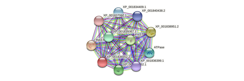 CC1G_10046 protein (Coprinopsis cinerea) - STRING interaction network