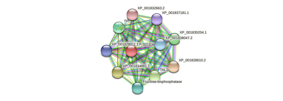 CC1G_06175 protein (Coprinopsis cinerea) - STRING interaction network