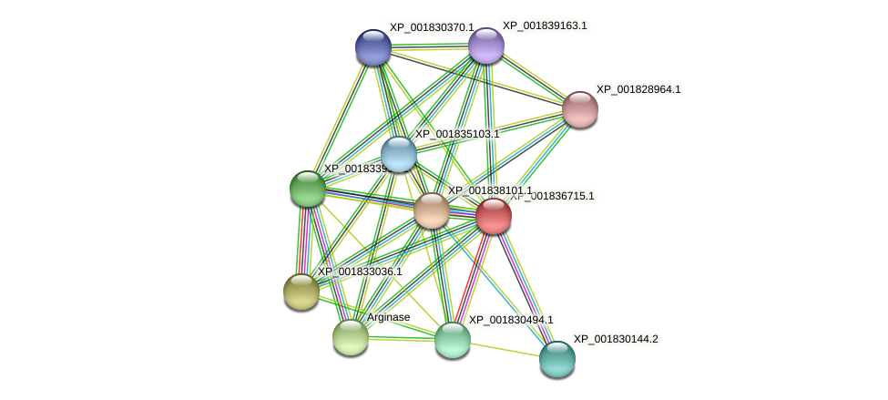 CC1G_08100 protein (Coprinopsis cinerea) - STRING interaction network