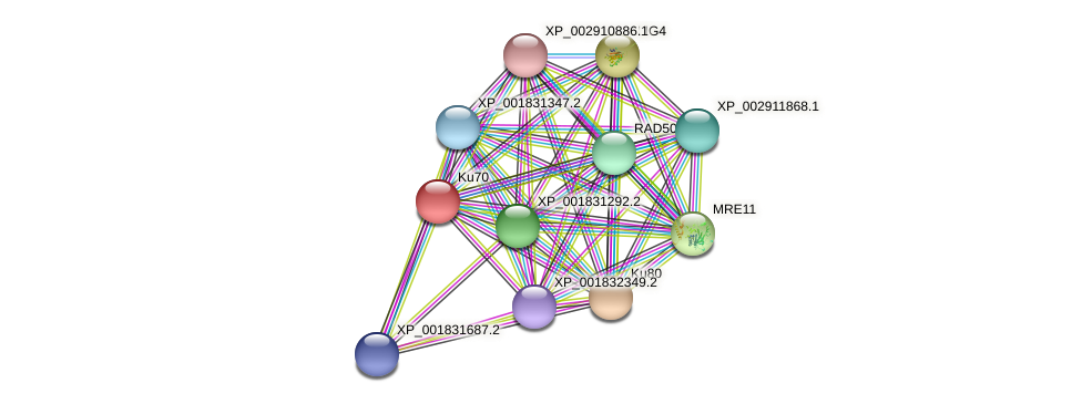 CC1G_08102 protein (Coprinopsis cinerea) - STRING interaction network
